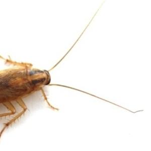 уничтожение тараканов в Алматы
