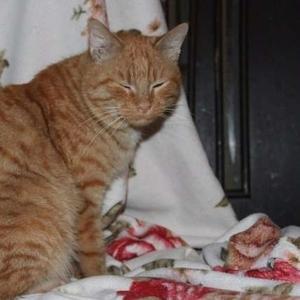 Толстый рыжий кот спешит подарить вам счастье!