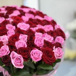 Букет из  101 розы розового и красного цвета 50 см
