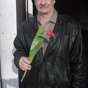 Тюльпаны к праздникам