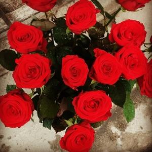 Красные розы 50-55 см