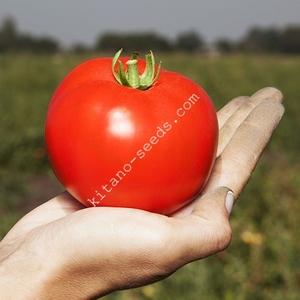 Семена грунтового томата ХАЙД F1,  KITANO SEEDS