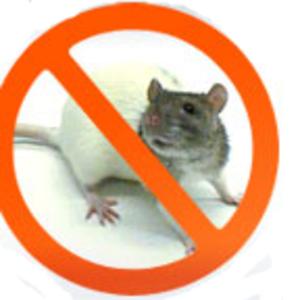 Борьба и уничтожение тараканов,  крыс,  клопов,  мышей,  блох.
