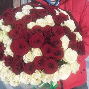 Букет из  101 розы белого и красного цвета 50 см