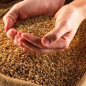 Продажа фуражного зерна.