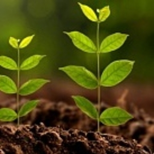 Высокоэффективные,  экологически чистые стимуляторы роста растений и м